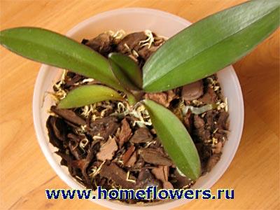 Кора для орхидей какая лучше