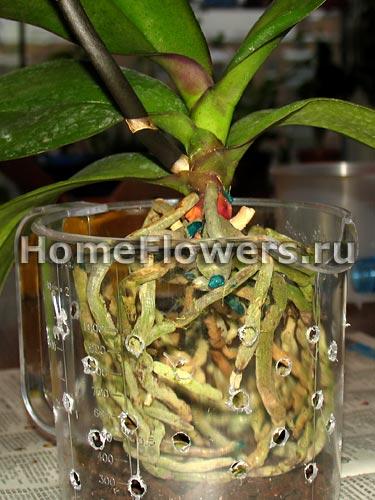 Дренаж для орхидей