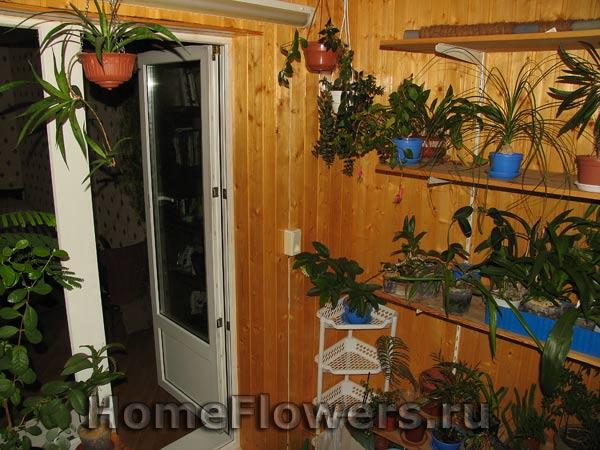 Сделай сам - комнатные цветы и растения на homeflowers.ru.