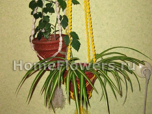 Если вашим комнатным растениям