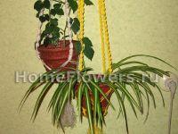 Кашпо для растений