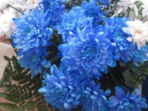 Какие комнатные растения цветут