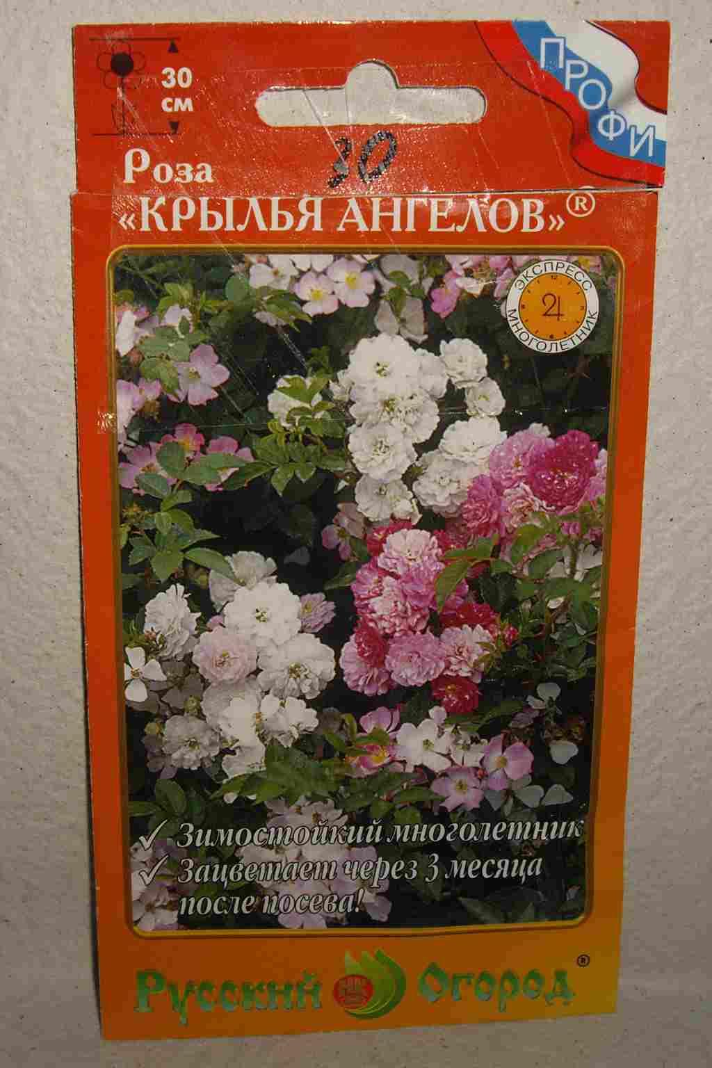 Роза крылья ангелов выращивание из семян фото отзывы 23