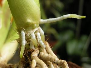 14 07 рост 1 корни.jpg