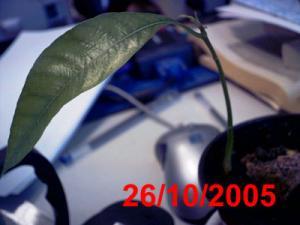 LU0386.jpg