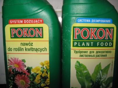 http://homeflowers.ru/yabbse/uploads/post-319-1106774614.jpg