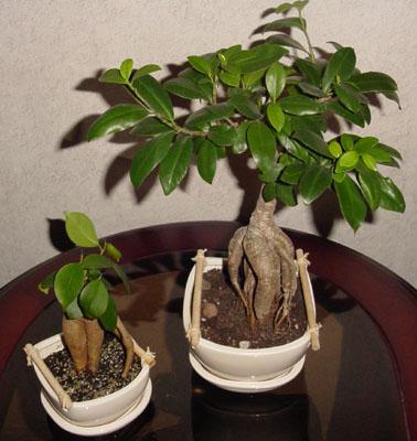 Цветок корень наружу